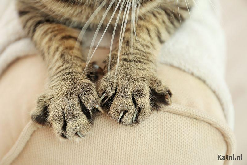 Leren Bank Katten.Kat Krabt Aan Meubels De Beste Oplossingen Katnl Nl